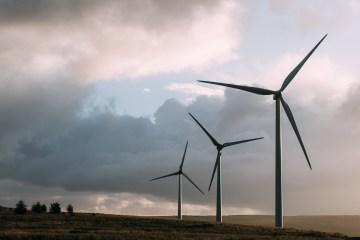 écologie, éoliennes dans un champs