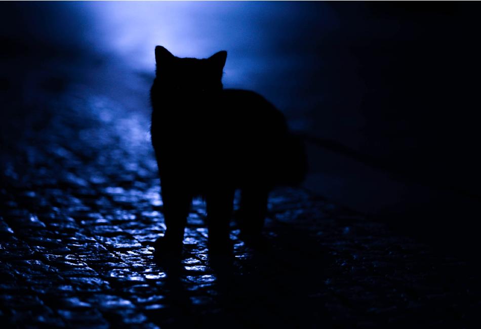 Noite   por Deborah Dornellas