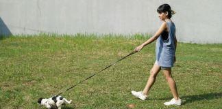 Caminhando após a refeição com o cão