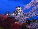 姫路城の桜 ライトアップの時期は?夜桜をライブカメラで観るには?