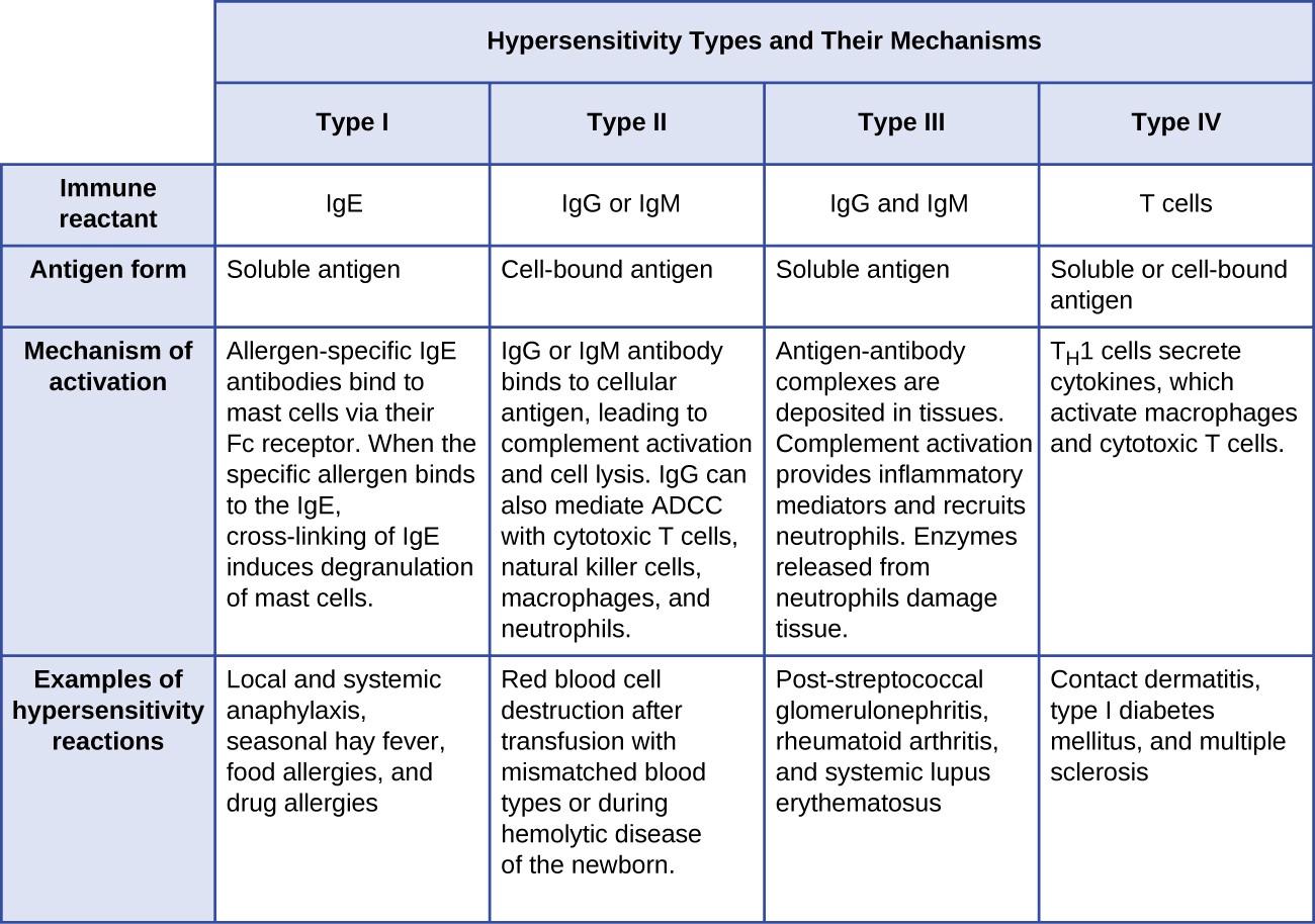 15 1 Hypersensitivities Allied Health Microbiology