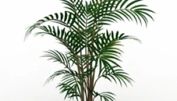 Palm 3D Model Free Download ID6518 (3ds) - Open3dModel