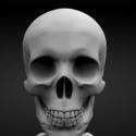 Highpoly Skeleton