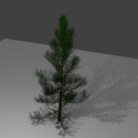 Nature Christmas Pine Tree