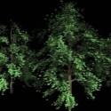 Highpoly Pine Trees