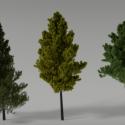 Realistic Trees Scene Free 3d Model