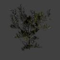 Tree Bushes