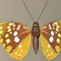 Butterfly 3d Max Model Free