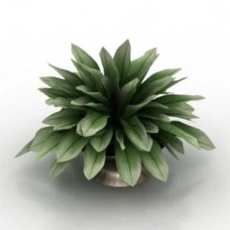 Green Bonsai Home Plant 3d Max Model Free