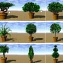 Bahçe ağacı bitki