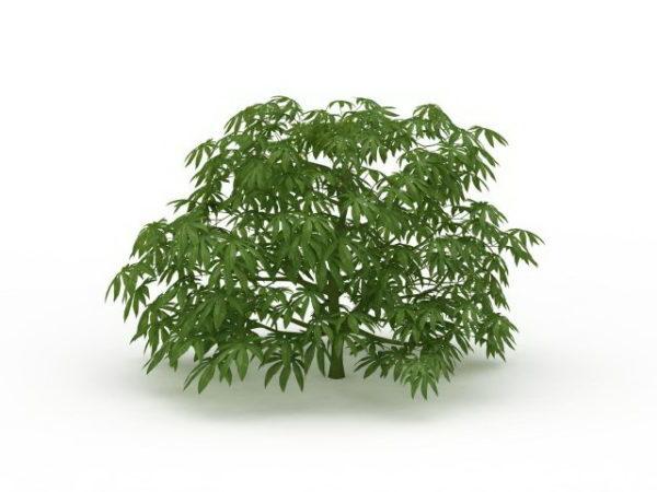 Japanese Aralia Paperplant