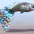 Güzellik Akvaryum Balıkları