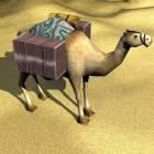 Çölde Afrika deve