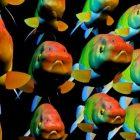 Fantezi Goldfish Okulu Hayvan