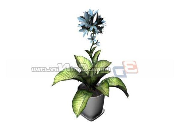 Rohdea Japonica Bonsai Plant