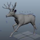 Running Deer Rig