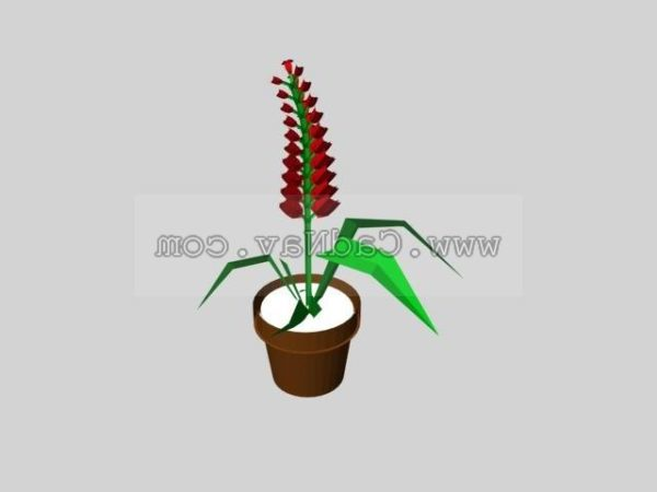 Salvia Splendens Plant
