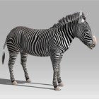 Zebra Rig & Animated