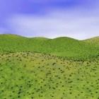 Peyzaj Çim Tepeleri