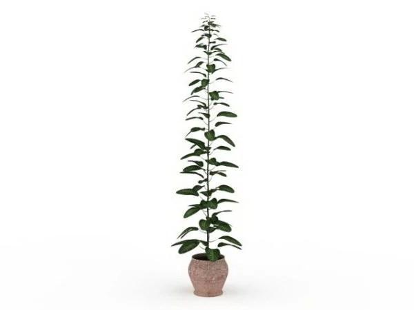 Plantas altas en macetas al aire libre