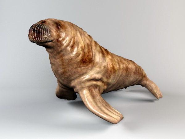 Sea Walrus Animal