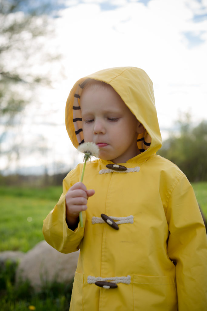 Cute kid blowing a dandelion in the spring time