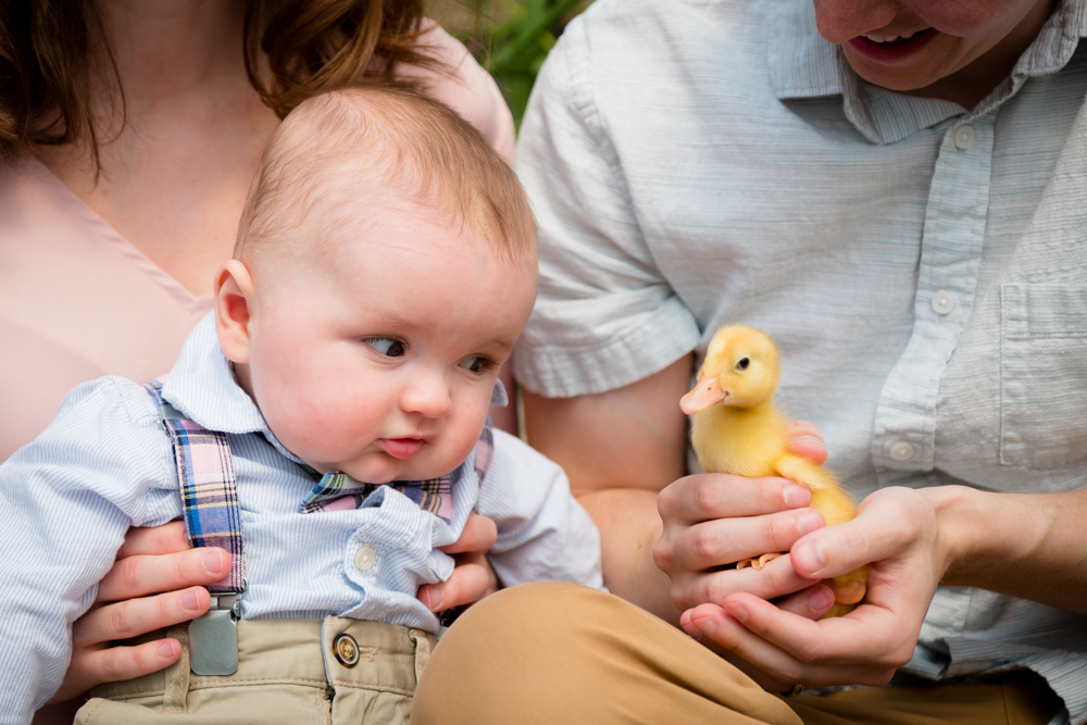 Baby boy looking at a duckling