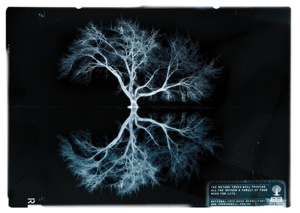 National Tree Week promotional image: lungs (The Tree Council)
