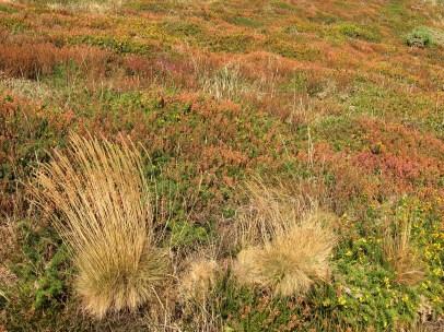 Rusey Cliff heath