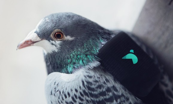 Plume Labs partnered with Twitter to launch pigeons with air pollution sensors over London.