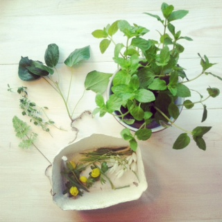 Urter og blomster til sunprint
