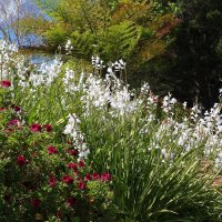 Auldearn Garden in Elgin  - open this weekend