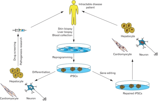 Potential applications of human induced pluripotent ste ...