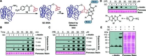 Ni bis(dithiolene) reagents selectively label quadricyc ...