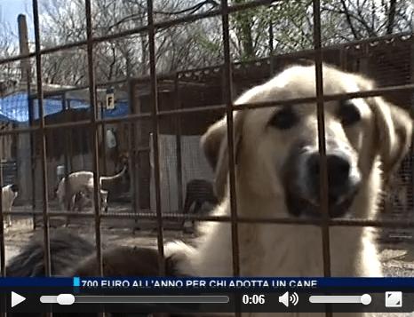 Risparmio tarsu adozione cane