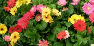 piante anti inquinamento