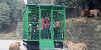 zoo cina