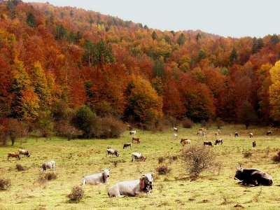 Foliage Sila Camigliatello