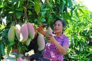 Cultivar selezionate