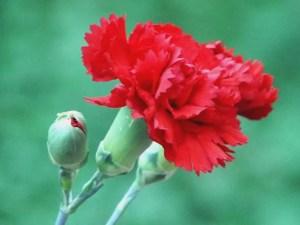 L'affascinante mondo dei fiori: linguaggi e significati