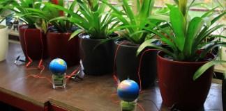 Energia prodotta dalle piante: una grande risorsa
