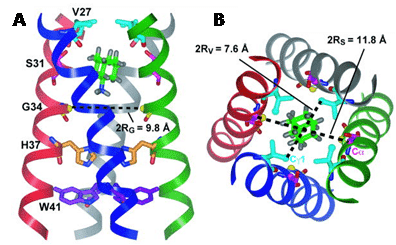 Figure 10 shows the solid-state NMR structure of amantadine-bound M2 proton channel in lipid bilayers