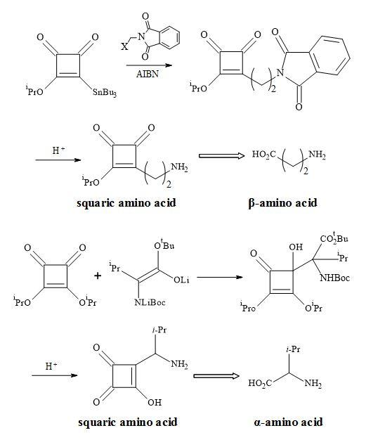 Figure 32. Synthesis of squaryl amino acid metaphors