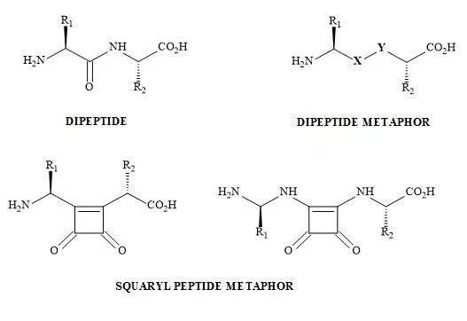 Figure 47. Peptide bond squarate metaphor