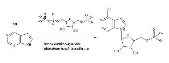 Figure 82. Bioactivation of 6-mercaptopurine