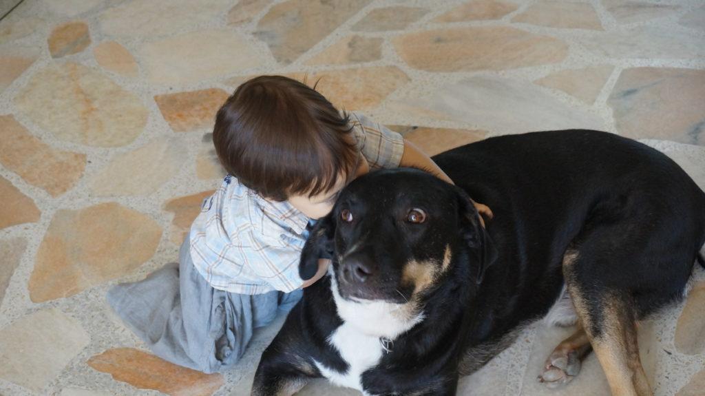 El Lugar Pet Dog