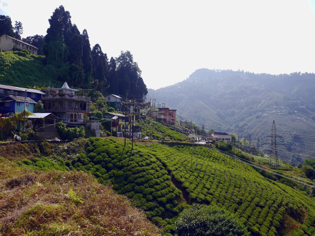 Colorful houses overlook the tea fields in Darjeeling