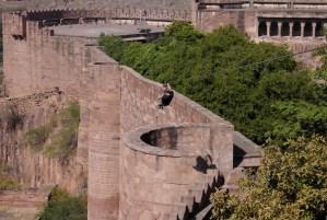 Zipline in Jodhpur