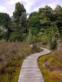 Bogs and Boardwalks