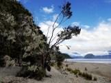 Manuka Beach